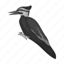 animal, bird, feathered, wild, woodpecker, zoo icon