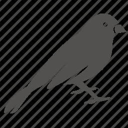 bird, canary, finch, pet, sparrow icon