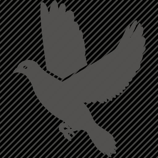 bird, dove, flight, peace, wings icon
