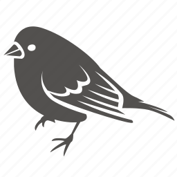 bird, canary, finch, pet, small, sparrow icon