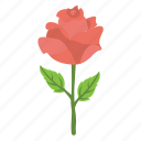 greeting gift, party present, red rose, romance, romantic icon