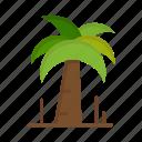 brazil, brazilian, carnival, celebration, palm, tree icon