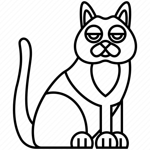 cat, chartreux, france, kitten, pedigree icon