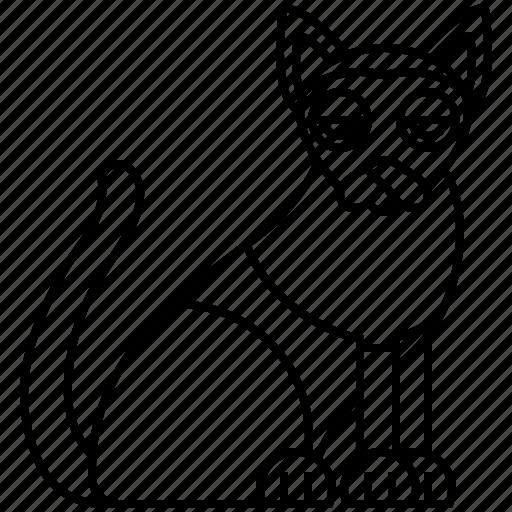 cat, pedigree, shorthair, siamese, silky icon