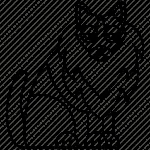 beautiful, cat, fluffy, turkish, van icon