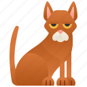 abyssinian, brown, cat, domestic, purebred