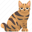 american, bobtail, cat, purebred, strip icon