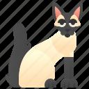 adorable, balinese, cat, feline, fluffy