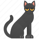bombay, cat, eyes, yellow icon