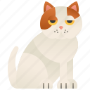 cat, cute, exotic, fluffy, shorthair icon