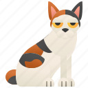 bobtail, calico, cat, japanese, pet icon