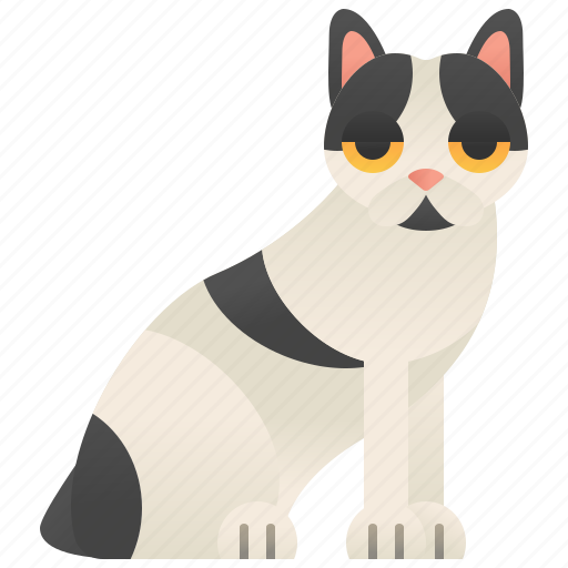 cat, fur, manx, silky, tailless icon