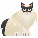 beautiful, cat, fur, playful, ragdoll icon