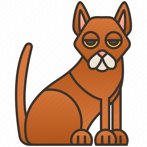 abyssinian, brown, cat, domestic, purebred icon