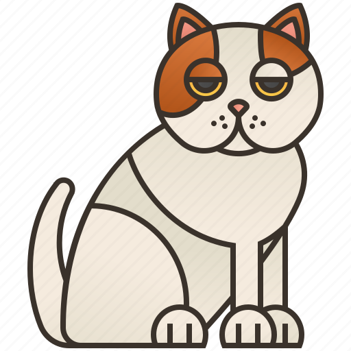 Cat, cute, exotic, fluffy, shorthair icon - Download on Iconfinder