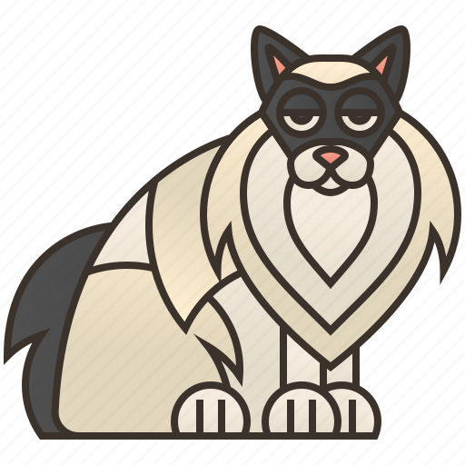 Beautiful, cat, fur, playful, ragdoll icon - Download on Iconfinder
