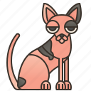 hairless, cat, pink, skin, sphynx