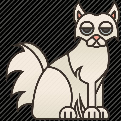 adorable, angora, cat, fluffy, turkish icon
