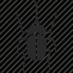 beetle, bug, fly, horn beetle, insect, rhinoceros beetle icon