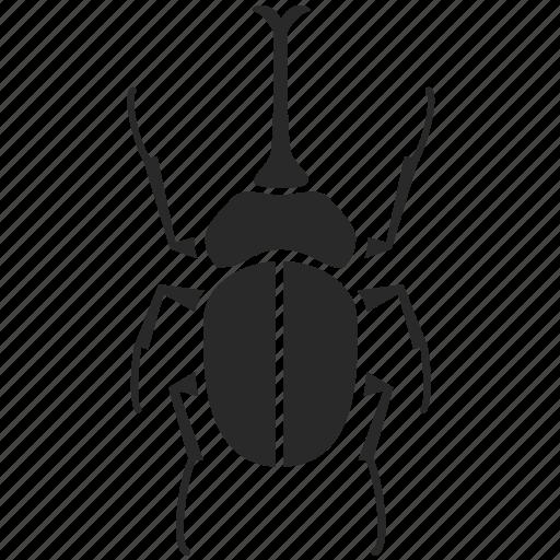 Beetle Bug Fly Horn Beetle Insect Rhinoceros Beetle Icon