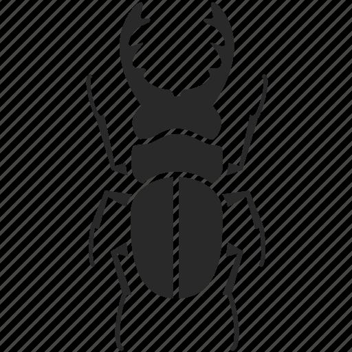 beetle, bug, hercules beetle, horn beetle, insect, rhino beetle, stag beetle icon