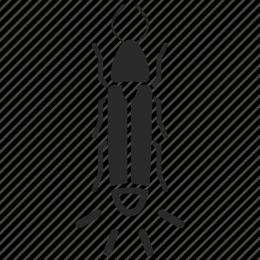 bug, firefly, glow, glow worm, insect, lampyrid, lightning bug icon