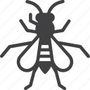 fly, gadfly, horsefly, bee