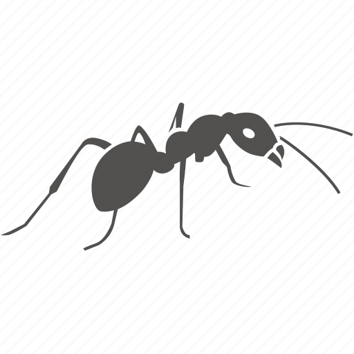 ant, bug, infection, infestation, insect, kill, pest, removal icon