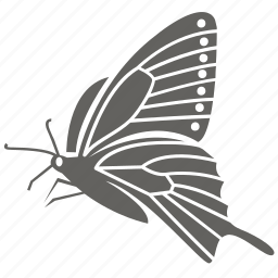 bug, butterfly, insect, moth, pretty icon