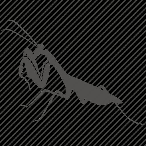 alien, bug, insect, mantis, praying icon