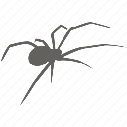 arachnid, bug, dangerous, poison, spider, toxic, venom icon