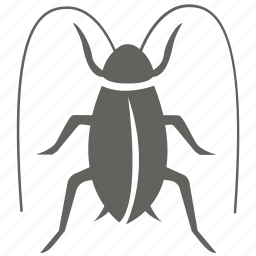 bug, cockroach, infestation, insect, pest, removal, roach icon