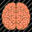 brain, brainstorming, brainstorm