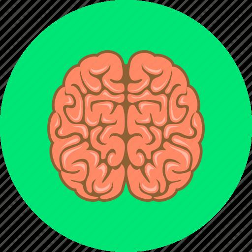 brain, brainstorm, brainstorming, think icon