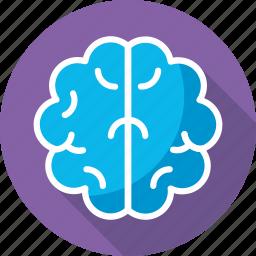 anatomy, brain, human head, mind, thinking icon