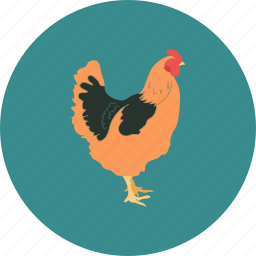agribusiness, agriculture, agronomy, aviculture, bird, farming, hen icon
