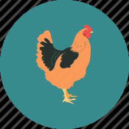 agriculture, aviculture, bird, farming, hen icon