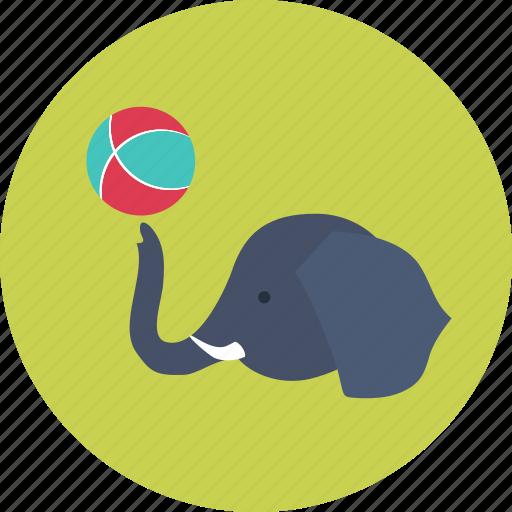 circus, elephant, entertainment, focus, trick icon
