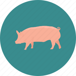 agriculture, agronomy, farming, pig, swine icon