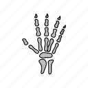 bones, hand, medical, ray, x