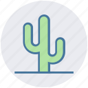 cactus, desert, eco, flowerpot, nature, plant, pot