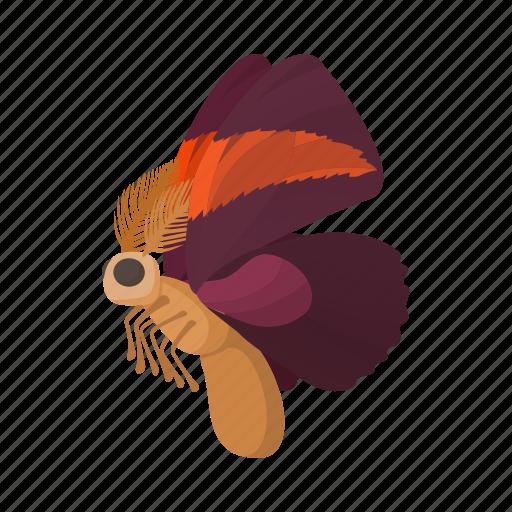 butterfly, cartoon, maroon, nature, orange, sign, style icon