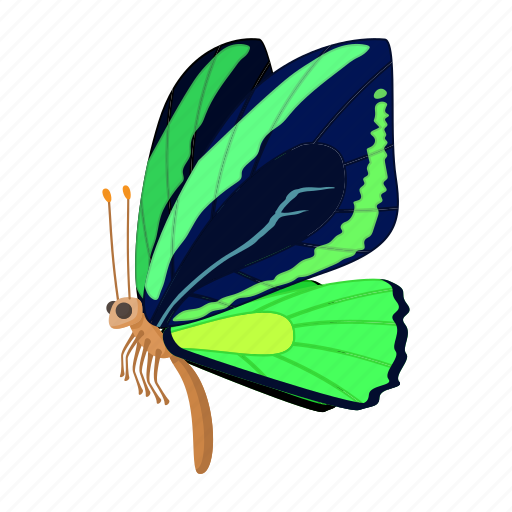 butterfly, cartoon, dark, insect, nature, sign, style icon