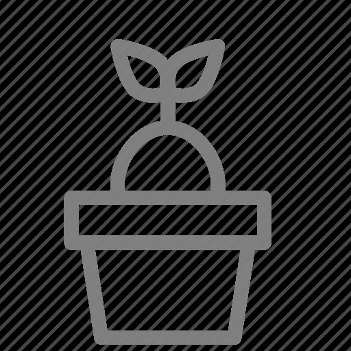 cacti, coconut, plant, pot, succulent, tree icon