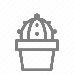 cacti, gymnocactus, plant, pot, succulent icon