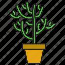 botanical, cacti, cactus, flowerpot, plant, pot, succulent