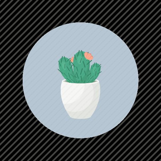 cactus, desert, plant, succulent icon