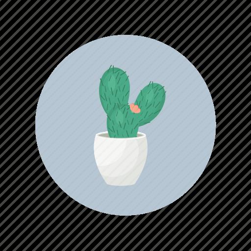 cactus, desert, plant, pot, succulent icon