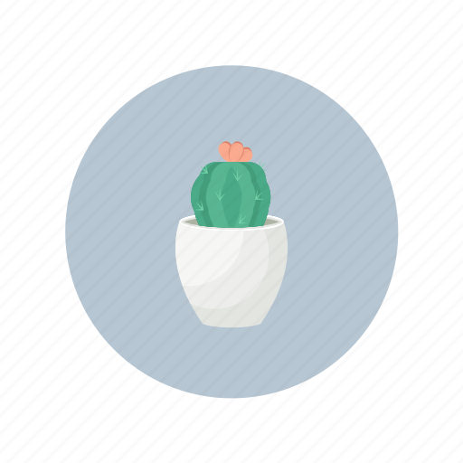 cactus, nature, pot, succulent icon