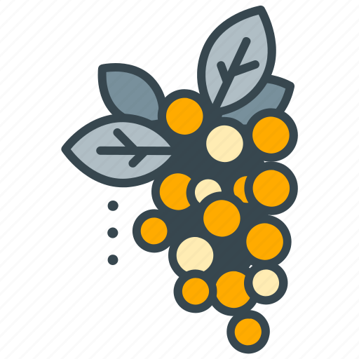 cafe, fruit, grapes, plant, restaurant, wine icon